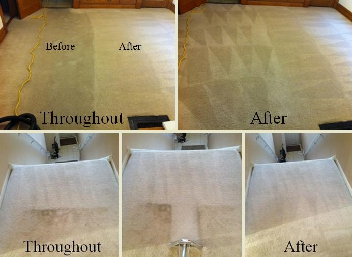 Carpet Cleaning Chicago Carpet Cleaning 29 95 Any